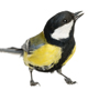Small exotic bird/Canari/Other